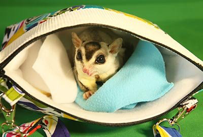 Holiday or Emergency Travel with Sugar Gliders